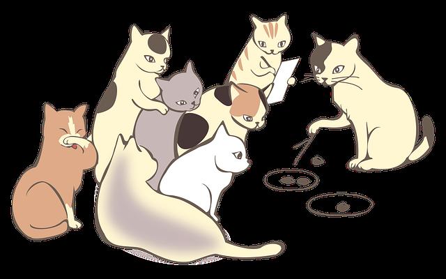 べしゃり王選手権、テーマは「猫」台本を大公開